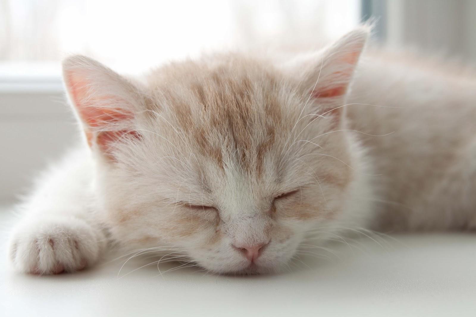 cute cats sleep wallpaper - photo #38