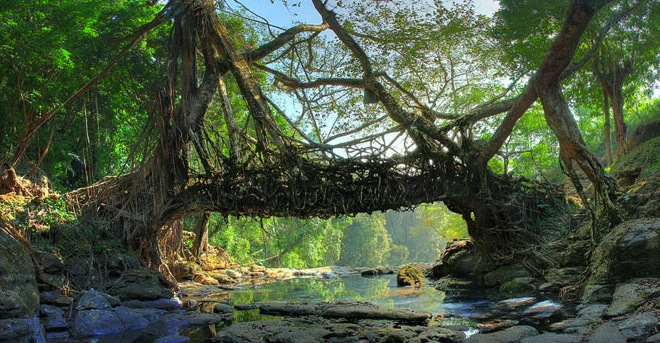 Bridge usually lasts 10 15 years and besides he requires constant