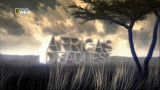 poster Download – Predadores Africanos Táticas de Caça – HDTV AVI + RMVB Dublado ( 2014 )