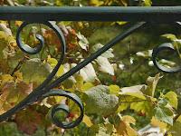 Fond d'écran NOVEMBRE 2012, avec et sans calendrier - Feuilles de vigne  (photo oct. 2012)