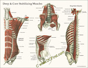 . the core (a huge group of muscles through the lumbar spine and pelvis, .