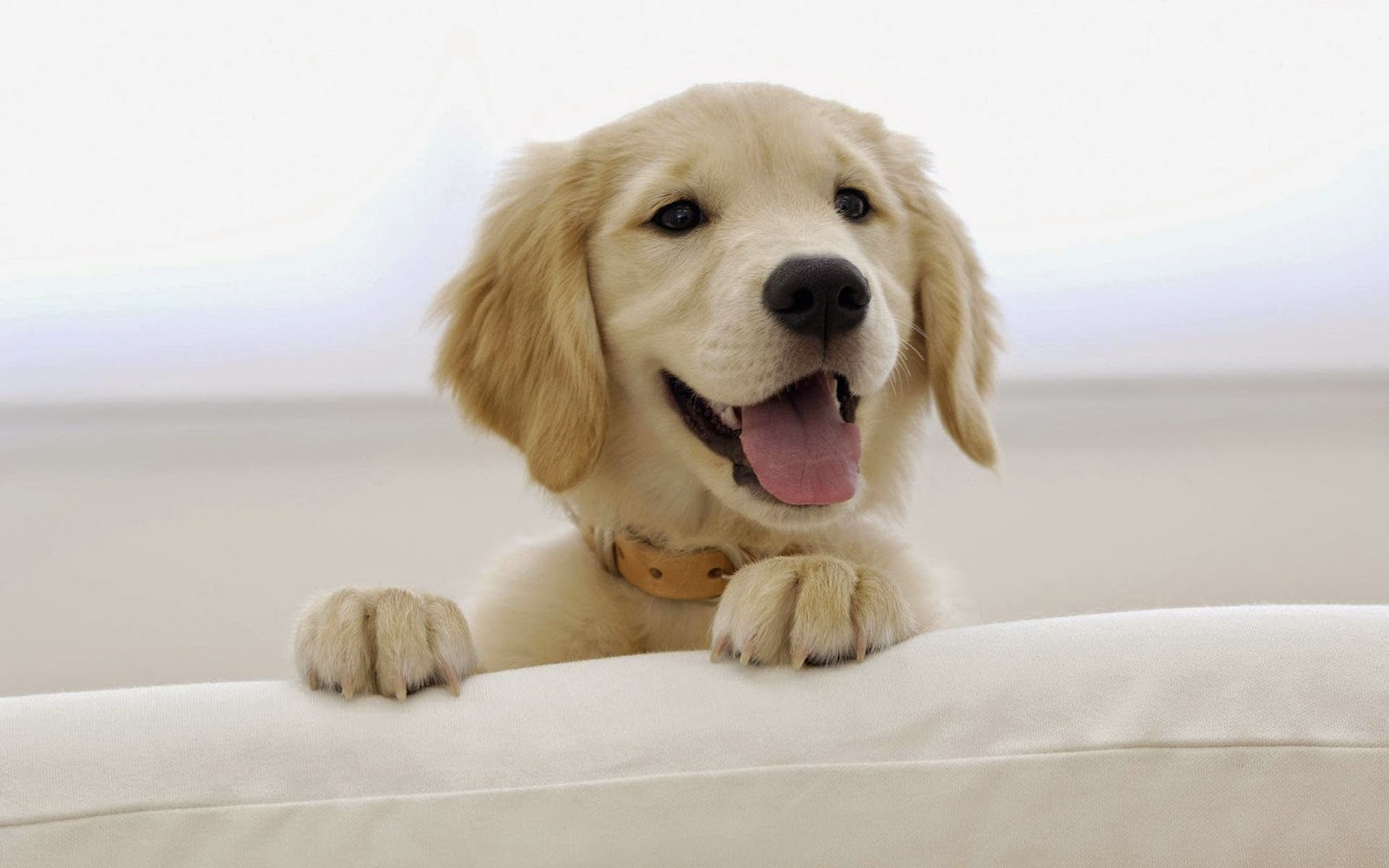 Smile is your best accessory - dog