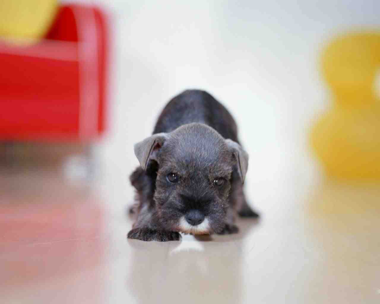 images of baby dogs - photo #36