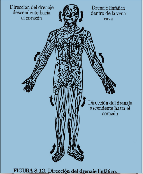 La osteoporosis y la osteocondrosis que se distinguen
