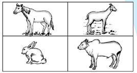 Cara hewan memperoleh makanan