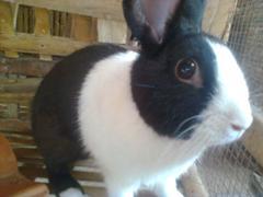 kelinci-2