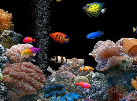 Colorful Fish Wallpapers, Beautiful Fish Desktop Pictures ...