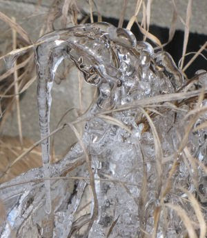 ice on grass