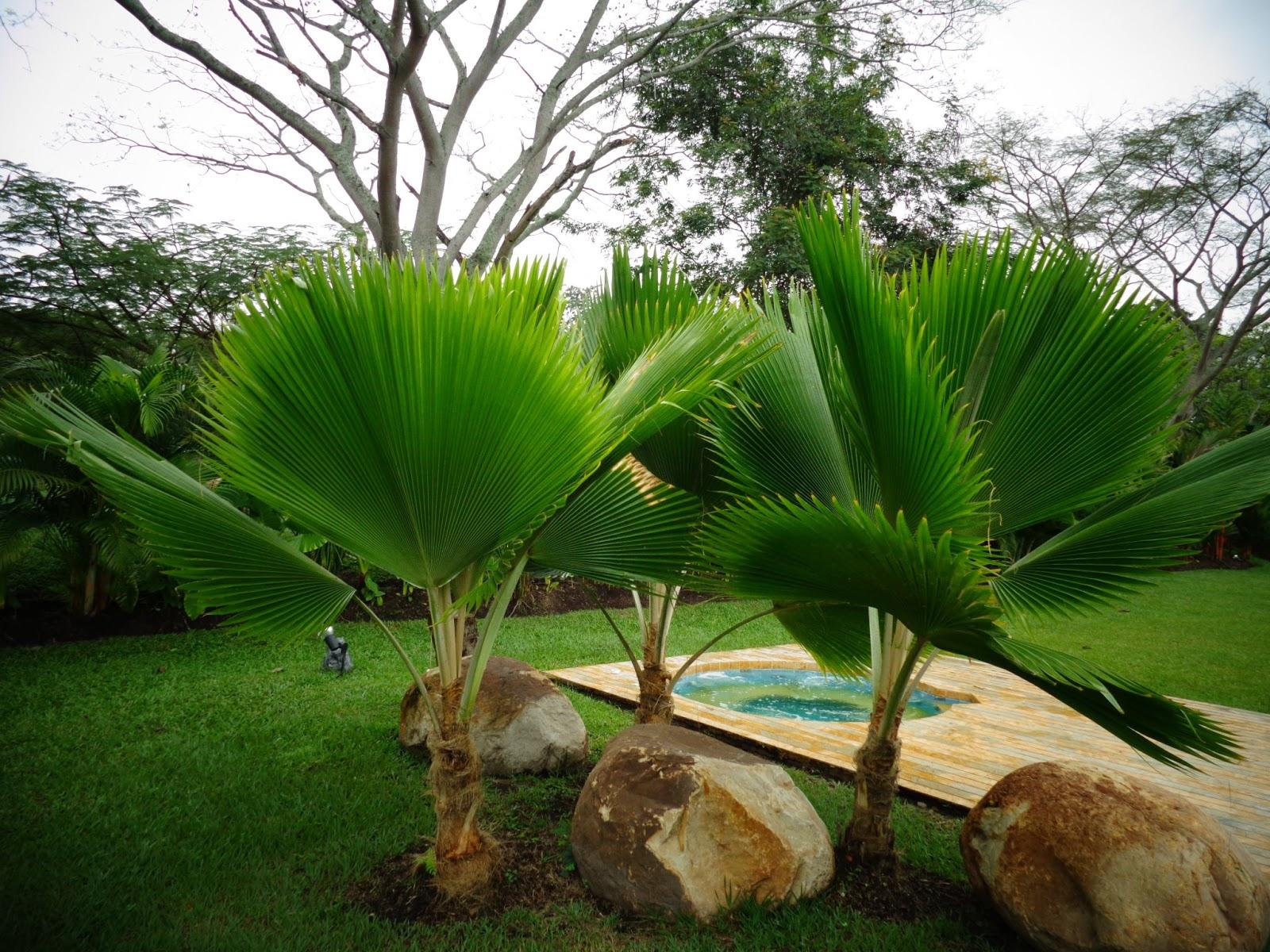 Vivero san antonio apulo cundinamarca colombia palma for Diferentes tipos de viveros