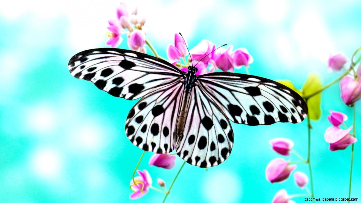 Butterfly Wallpaper 6836095
