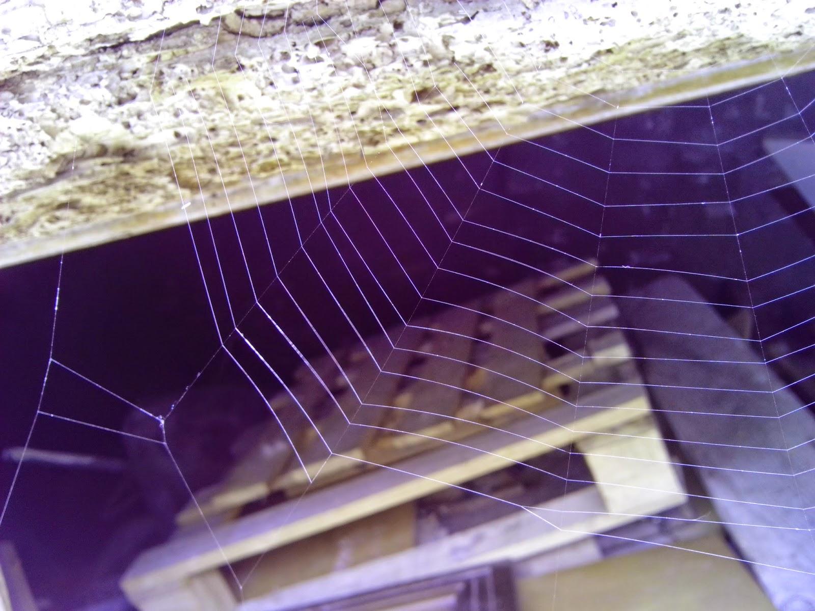 Tela de araña perfecta arquitectura