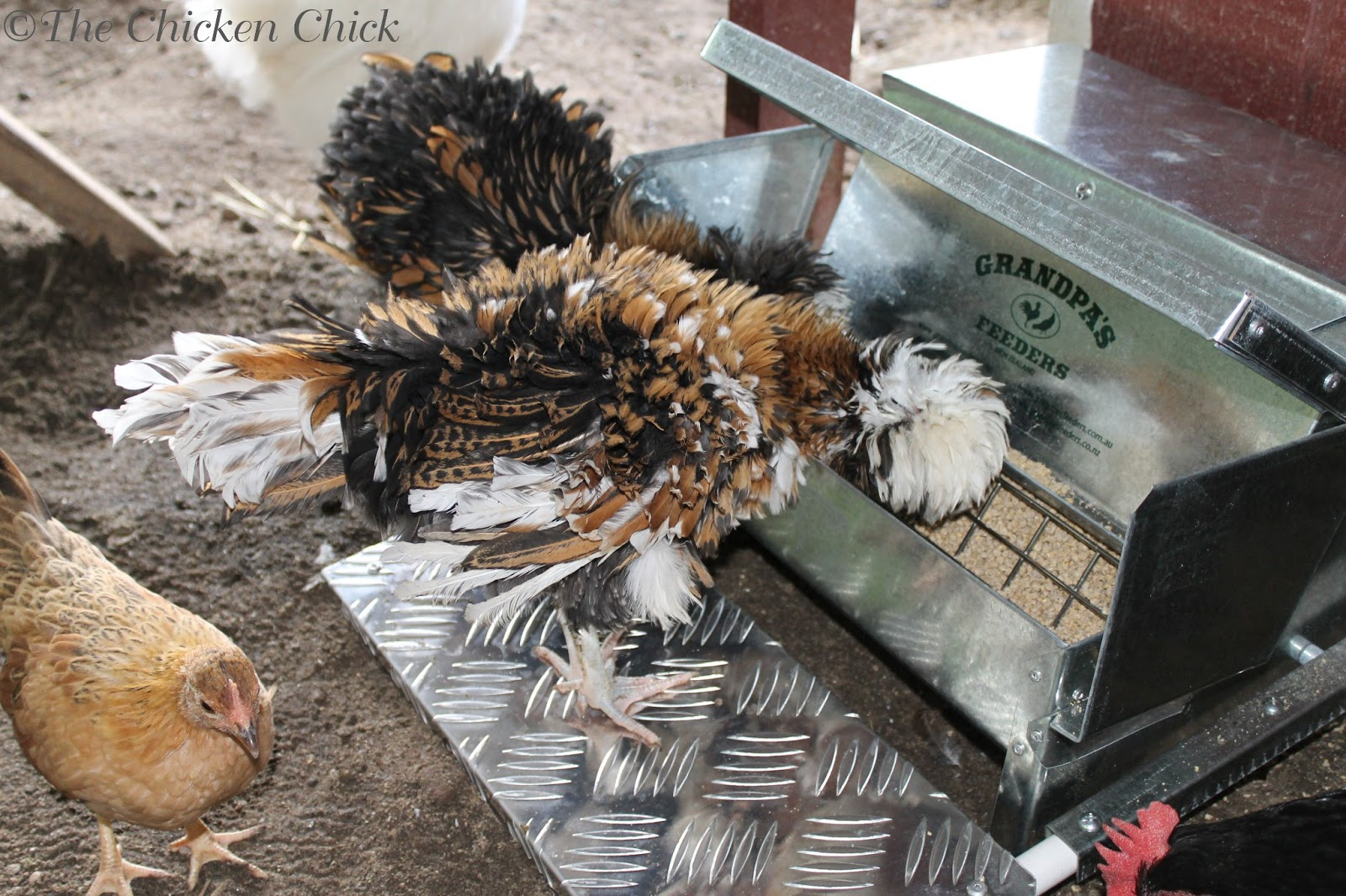 The Chicken Chick 174 15 Tips To Control Rodents Around