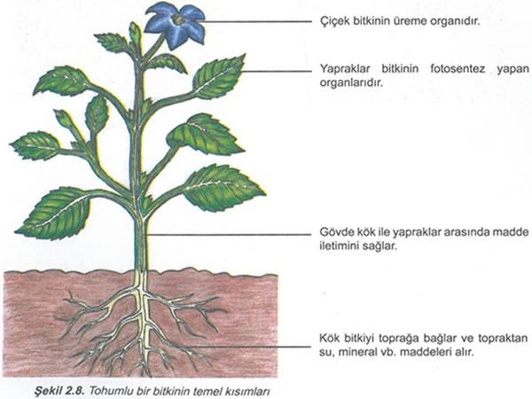 Toprağın temel özellikleri nelerdir