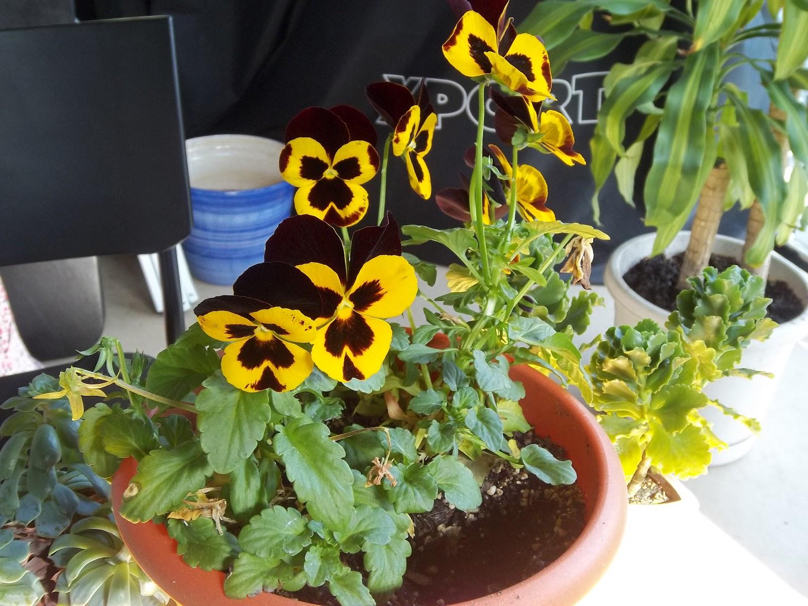 Ako sa vola tato kvetina