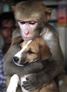 funny picture monkey holds dog