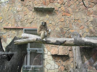 Жизнь обезьян в зоопарке Санкт - Петербурга