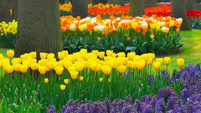 Jardines en primavera