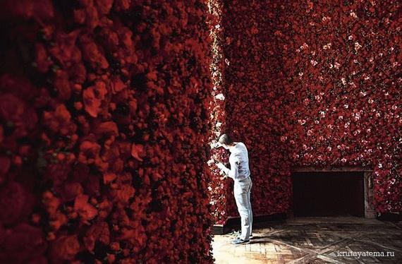 Стена из роз как сделать