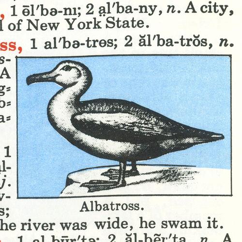 albatross by Dylan Todd
