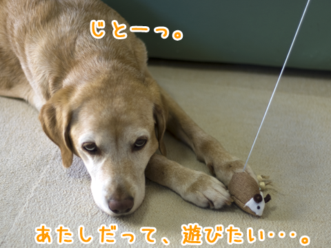 ジト目の犬