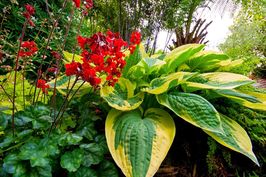 Цветы растущие в тени и полутени садовые