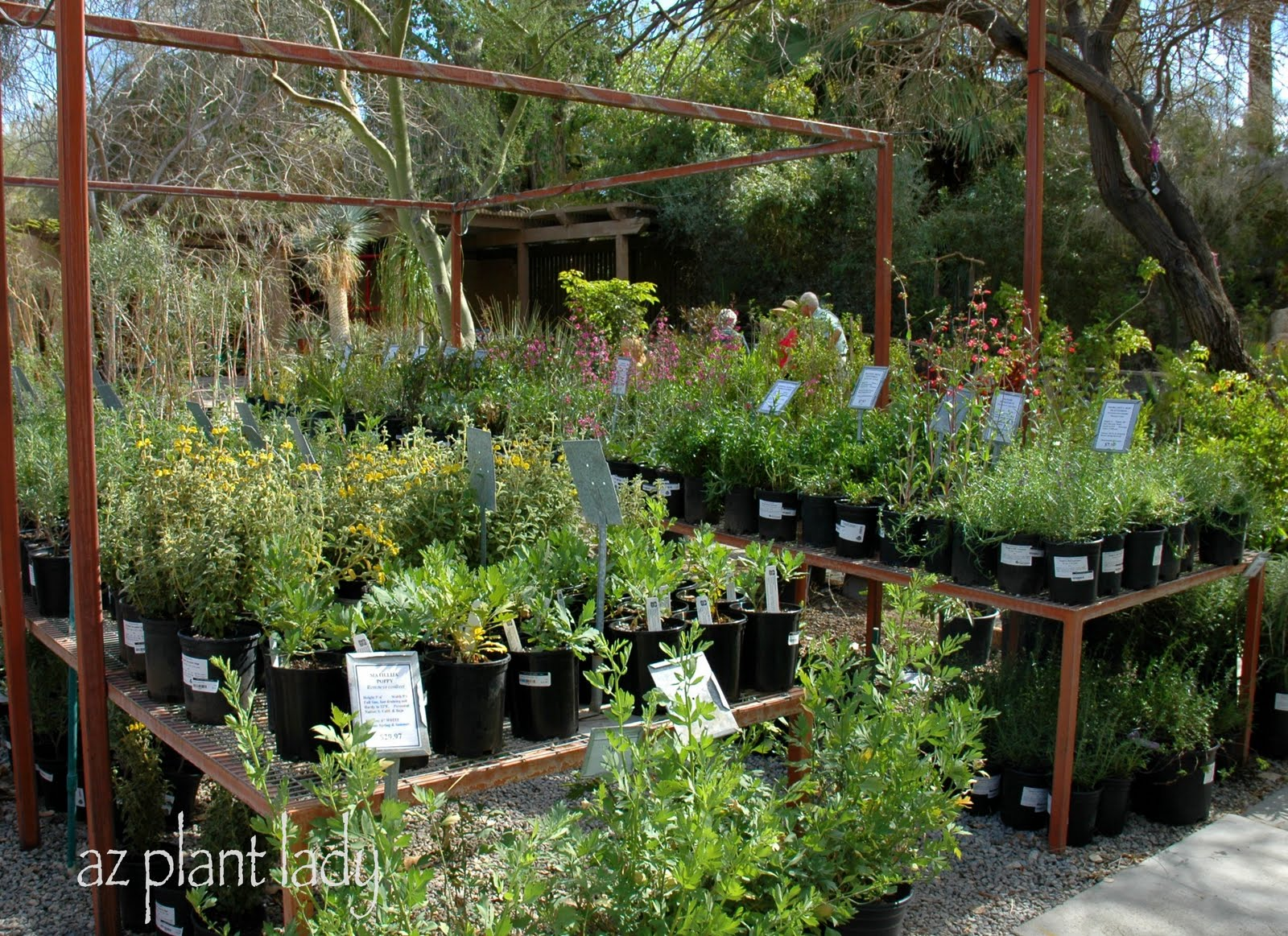 How Do You Choose A Plant Nursery Ramblings From Desert Garden Nurseries In My Area Thenurseries