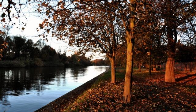 Autumn York