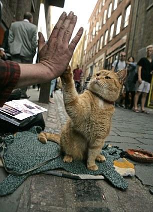El lenguaje corporal del gato 3