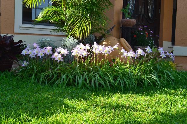 bunga di halaman rumah juli lifestyle wanita