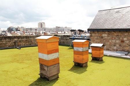 le blog de yves ollivier ruches de la ville suite. Black Bedroom Furniture Sets. Home Design Ideas