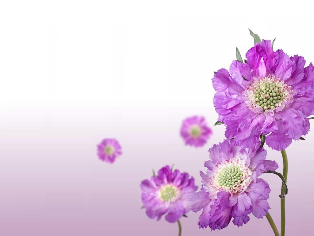 plete Wallpaper Collections Art Flower Wallpaper 1
