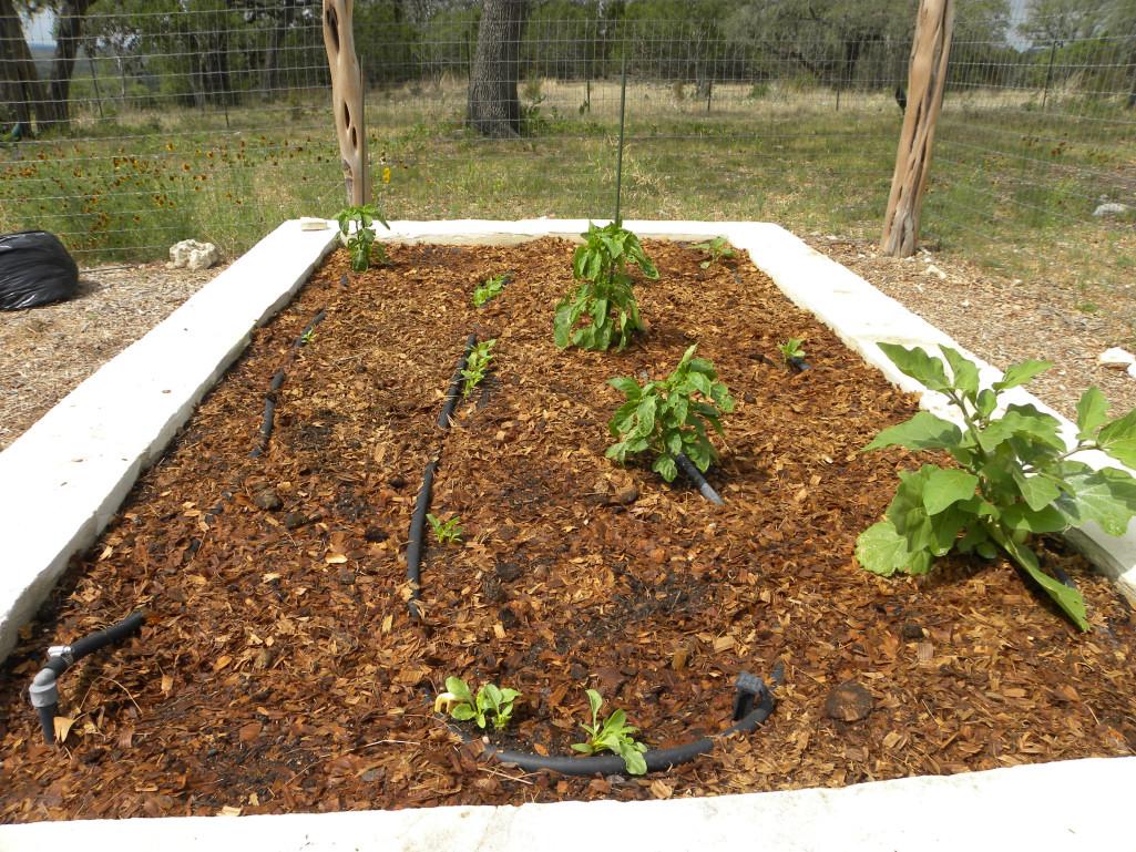Diane\'s Texas Garden: Gorgeous Compost