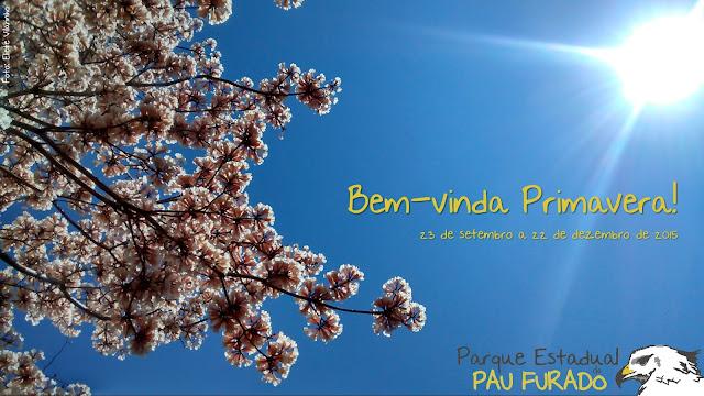 Florada Ipê Branco Parque Estadual do Pau Furado