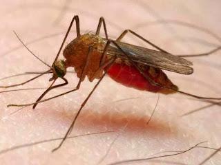 Gejala Penyakit Malaria dan Penyebabnya
