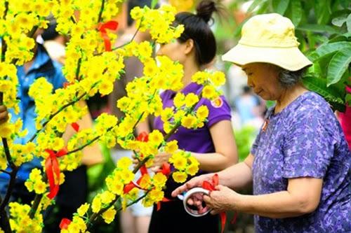 Cách chăm sóc để hoa mai nở đúng dịp Tết