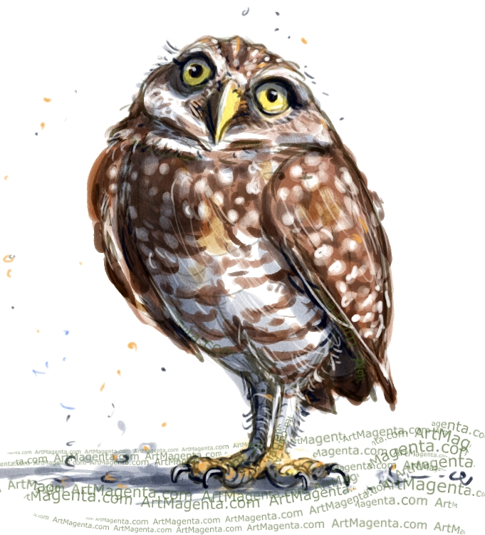 Burrowing Owl sketch painting. Bird art drawing by illustrator Artmagenta