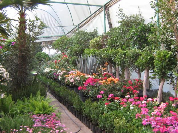 Plantas y jardin plantas arbustos y jardines for Arbustos para jardin con flores