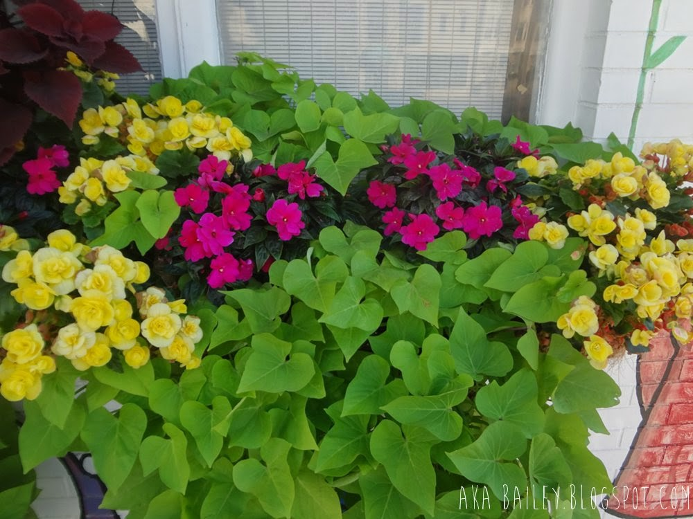 Windowsill flowerbed with pink and yellow flowers