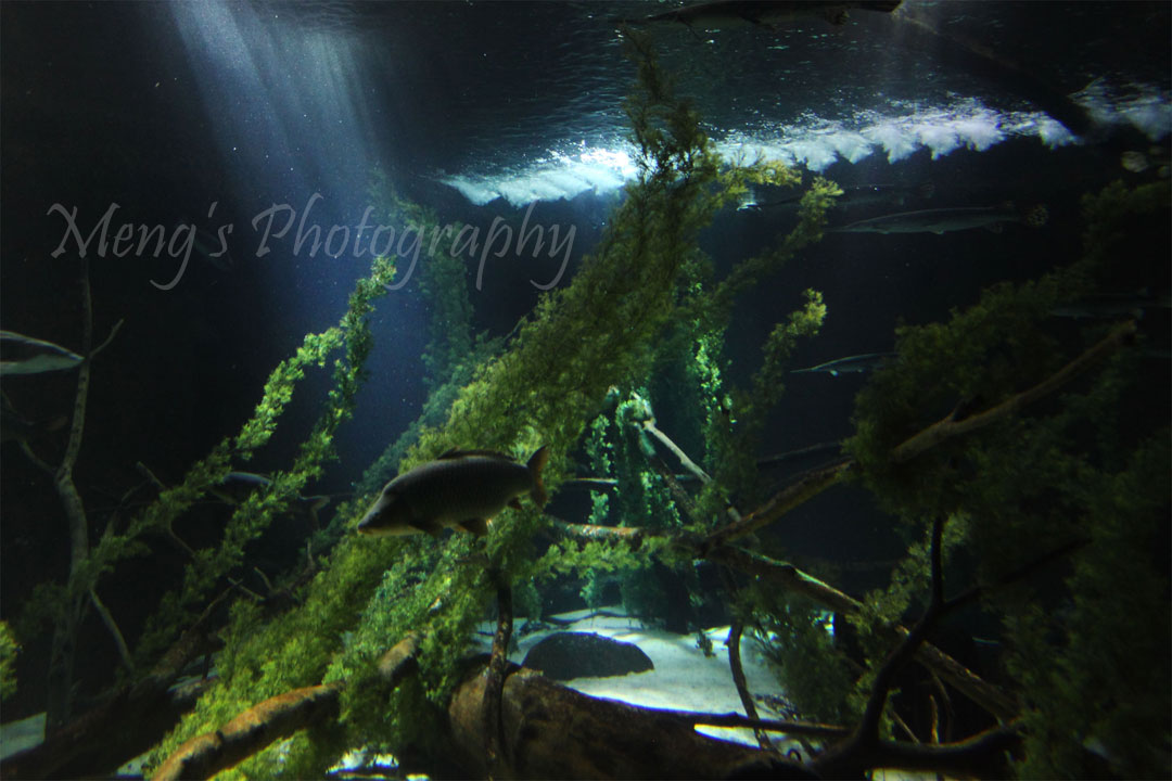 Meng S Photography Mall Of America Underwater World