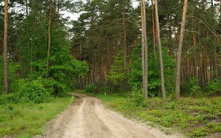 http://fotobabij.blogspot.com/2015/10/szlak-walk-partyzanckich-droga-w-strone.html