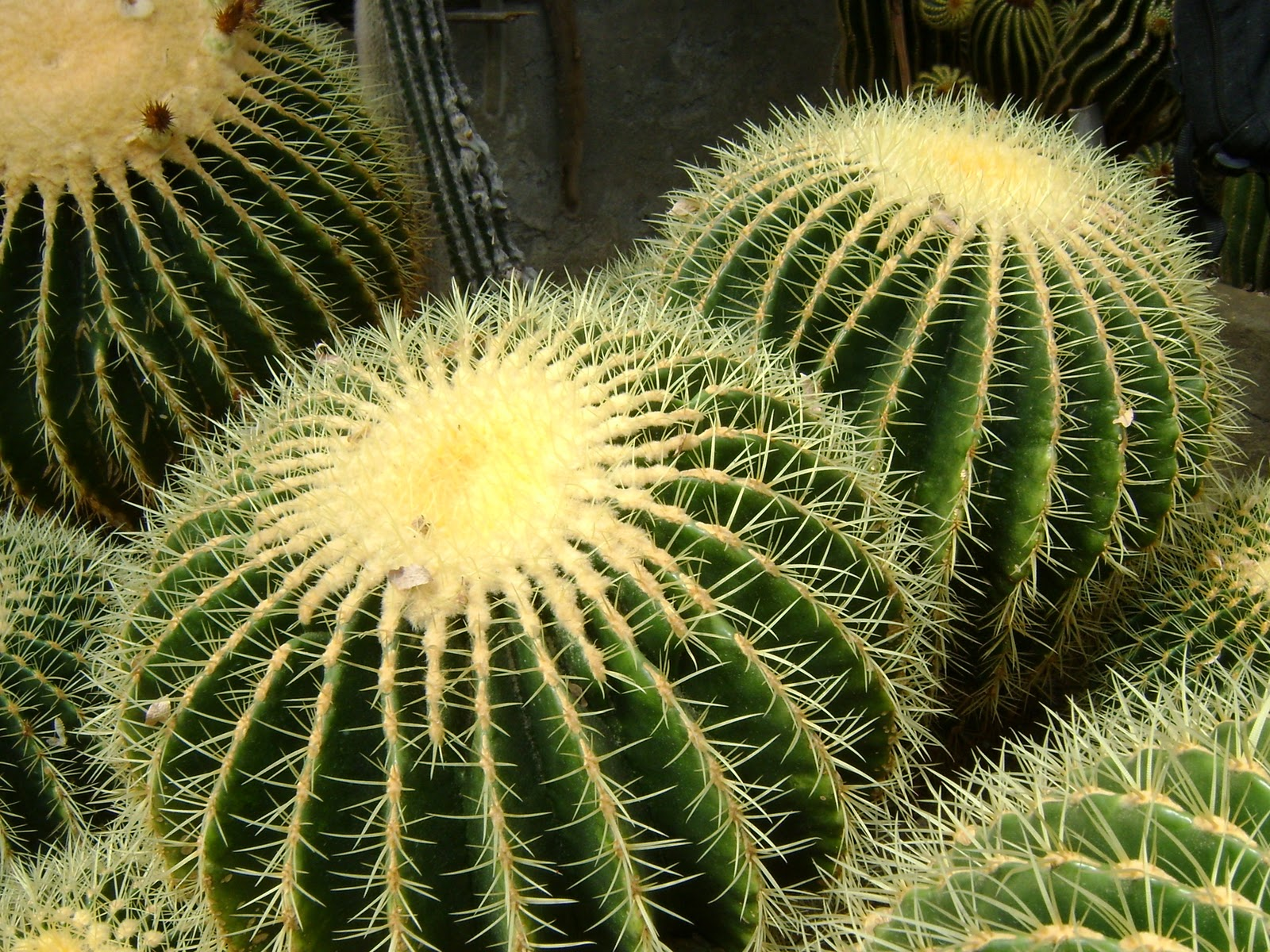 hd cactus wallpapers - photo #12