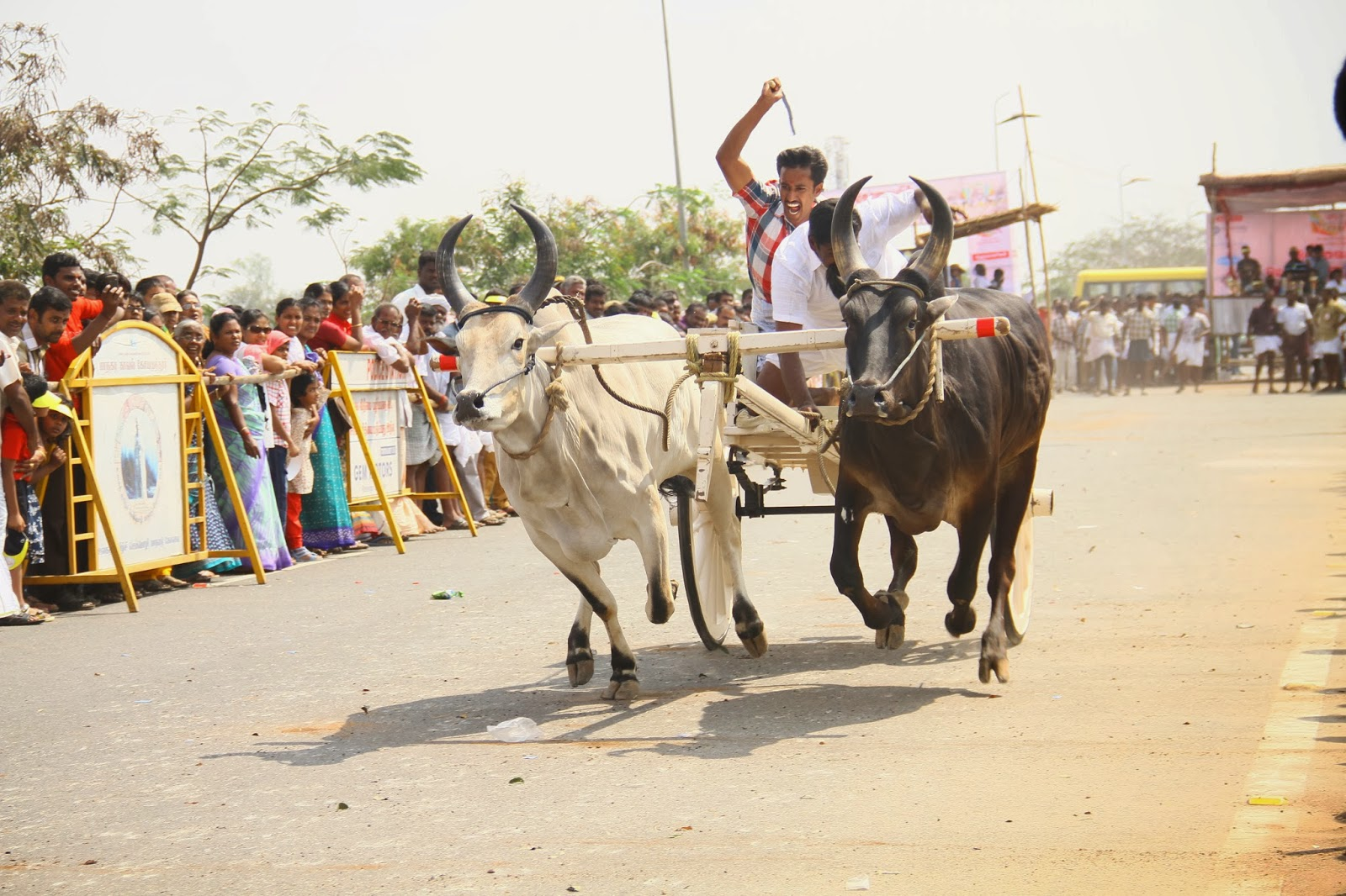 Bullock cart essay writer