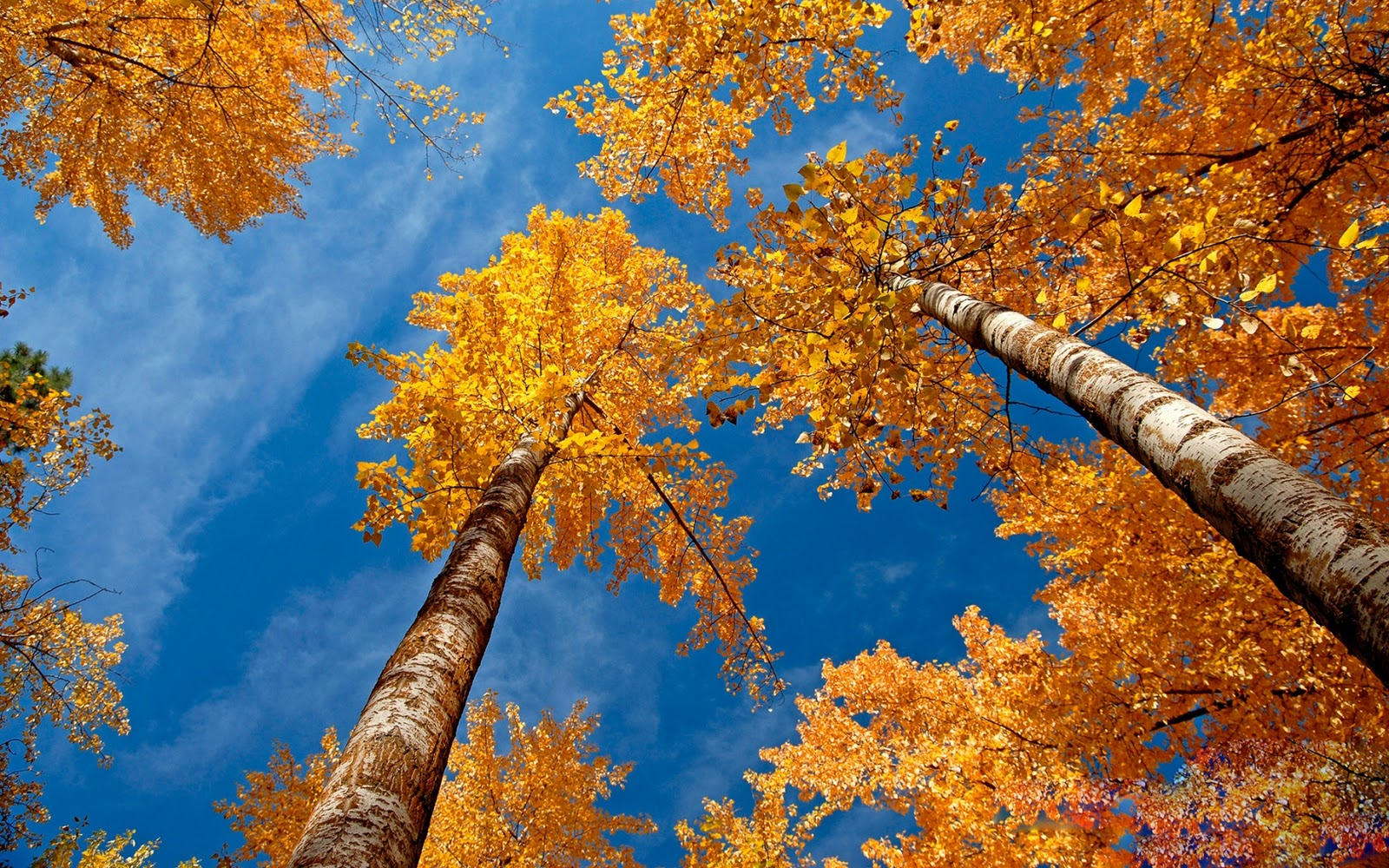 The best top autumn desktop wallpapers 3 En Güzel Sonbahar HD Duvar Kağıtları
