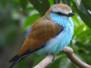 %D8%B7%D9%8A%D9%88%D8%B110 صور رمانسية طبيعية لأجمل الطيور 2014