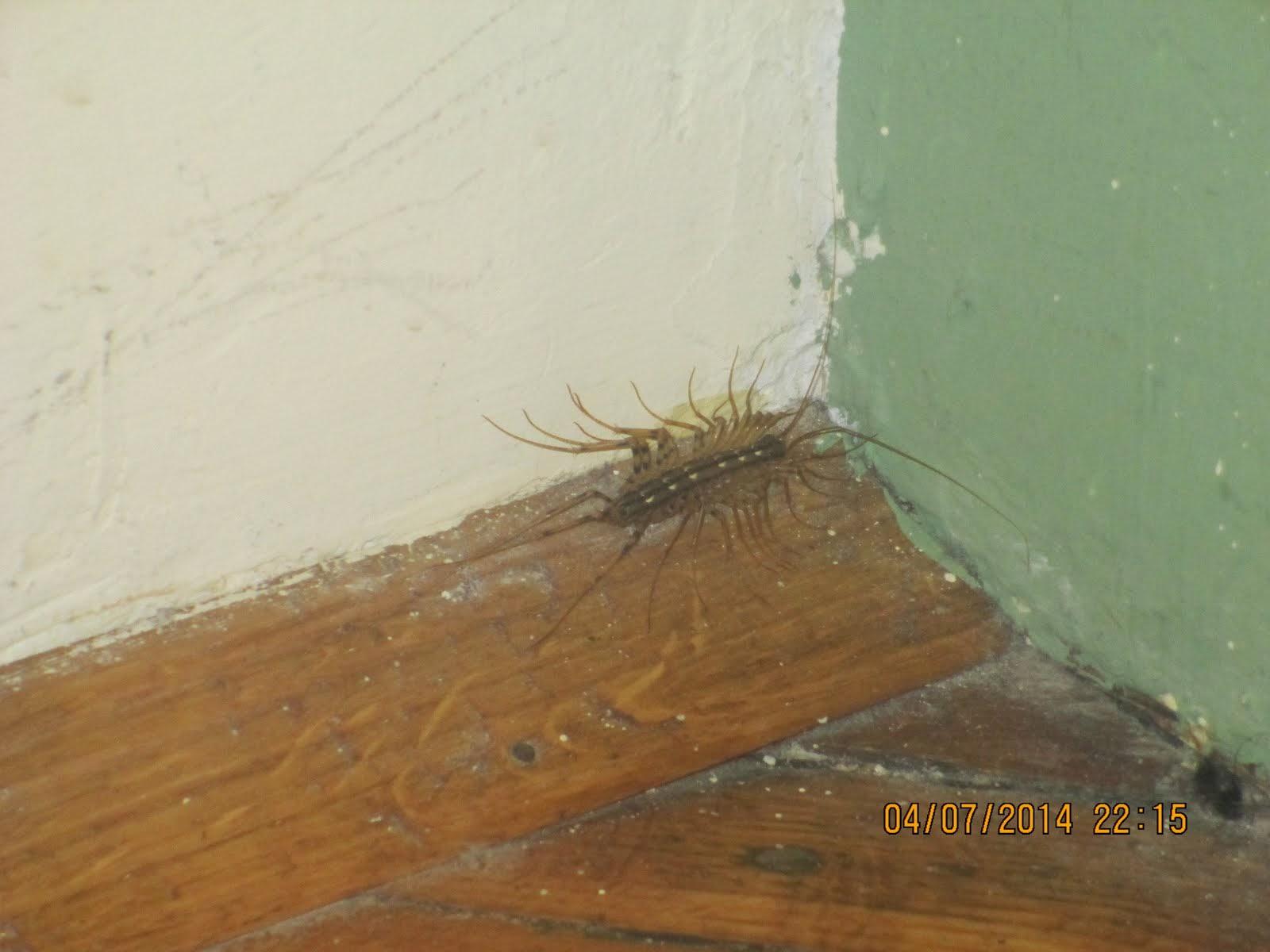 Big Bugs