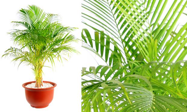 plantas para jardim vertical meia sombra : plantas para jardim vertical meia sombra:Rabiscando Moda: Plantas para dentro de casa