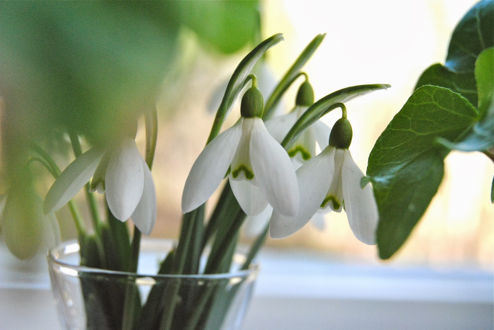 Ärligt och härligt om trädgård och natur