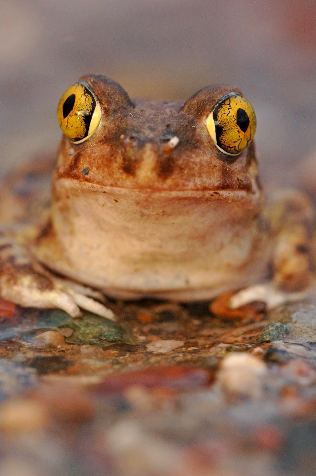 Dissertation ideas wildlife conservation