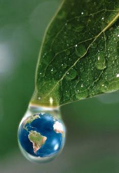 Proteja o Meio Ambiente