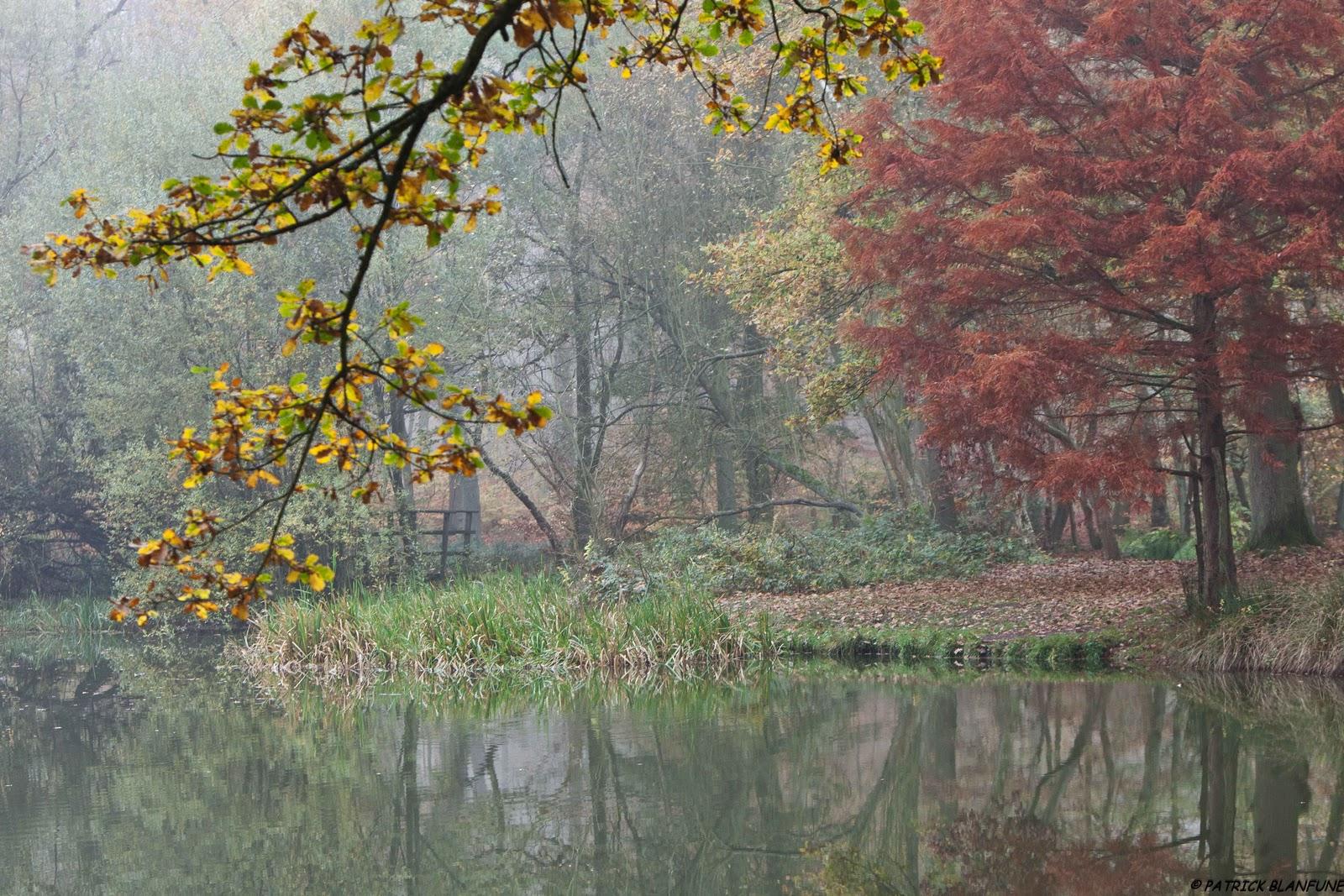 Au rythme des saisons couleurs et brumes for Garage de la foret epinay